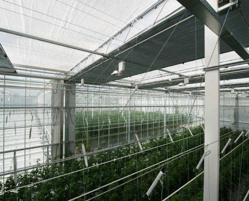 Klimaatscherm met belichtingsdoek en energiedoek bij Axia Seeds