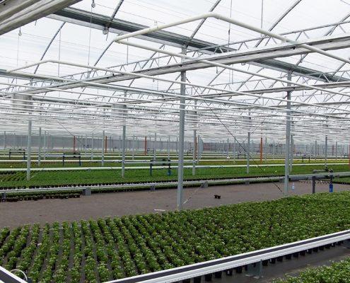 ruba potplanten in foliekas met dubbele scherminstallatie