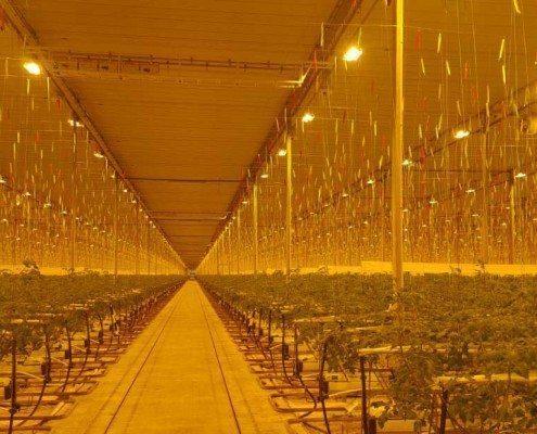 Verduisteringsscherm bij kwekerij Rimato